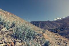 Piante del deserto che crescono nei terreni incolti aridi Fotografia Stock Libera da Diritti