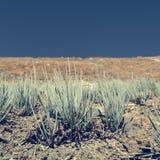 Piante del deserto che crescono nei terreni incolti aridi Immagine Stock Libera da Diritti