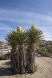 Piante del deserto nel deserto del Mojave Fotografia Stock