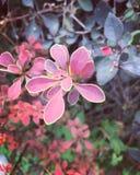 Piante del fiore Fotografia Stock Libera da Diritti
