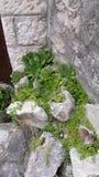 Piante del fiore Fotografia Stock