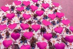 Piante del Fortunato-cuore o Hoya allineate Kerrii nel colore porpora, chiuso su per fondo o l'insegna immagine stock