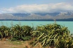 Piante del lino della Nuova Zelanda nel lago Pukaki Immagini Stock Libere da Diritti