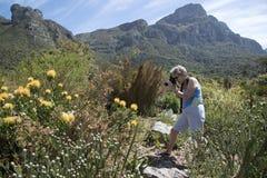 Piante del Protea e fiori Sudafrica immagine stock