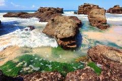 Piante del Seagrass fra le rocce a bassa marea, Australia Fotografia Stock