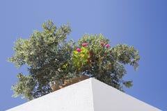 Piante del tetto Fotografie Stock Libere da Diritti