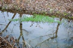 Piante dell'alga dell'acqua in fiume Fotografie Stock