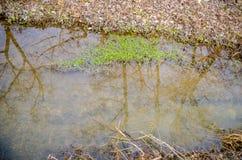 Piante dell'alga dell'acqua in fiume Fotografie Stock Libere da Diritti