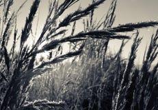 Piante dell'erba Fotografie Stock