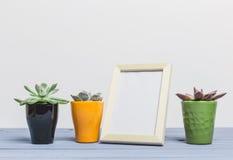 Piante della Camera, succulenti Fotografia Stock