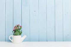 Piante della Camera, succulenti Immagine Stock