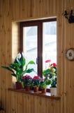 Piante della Camera sulla finestra Fotografia Stock Libera da Diritti