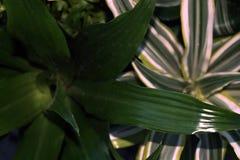 Piante della Camera Vendita delle piante della casa Fotografie Stock Libere da Diritti