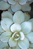 Piante della Camera Vendita delle piante della casa Fotografia Stock Libera da Diritti