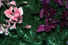 Piante della Camera Vendita delle piante della casa Immagini Stock Libere da Diritti