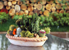 Piante della famiglia di cactus in POT Immagini Stock Libere da Diritti