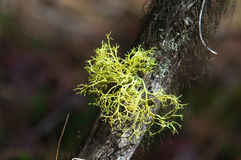 Piante della foresta Immagini Stock