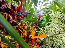 Piante della foresta pluviale, Costa Rica Immagini Stock