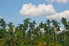 Piante della giungla del giardino Fotografia Stock Libera da Diritti