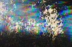 Piante della molla del prisma Fotografia Stock