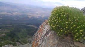 Piante della montagna fotografia stock