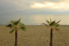 Piante della palma davanti al mare Immagini Stock Libere da Diritti