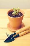 Piante della serra in vasi di argilla marroni su un vecchio succulente di legno del fondo Strumenti di giardinaggio nuovi, casset Fotografia Stock Libera da Diritti