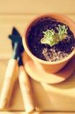 Piante della serra in vasi di argilla marroni su un vecchio succulente di legno del fondo Strumenti di giardinaggio nuovi, casset Immagine Stock Libera da Diritti