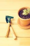 Piante della serra in vasi di argilla marroni su un vecchio succulente di legno del fondo Strumenti di giardinaggio nuovi, casset Fotografia Stock