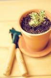 Piante della serra in vasi di argilla marroni su un vecchio succulente di legno del fondo Strumenti di giardinaggio nuovi, casset Immagine Stock