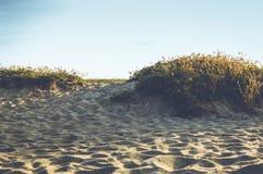Piante della spiaggia Immagini Stock Libere da Diritti