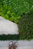 piante della Terra-copertura Fotografia Stock