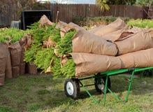 Piante delle felci su un carretto verde della mano al mercato degli agricoltori Immagine Stock Libera da Diritti