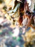 Piante delle foglie nelle variazioni speciali Immagini Stock Libere da Diritti