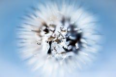Piante delle spine di inverno Fotografia Stock