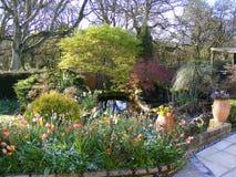 Piante dello stagno del giardino del patio ed alberi del acer Fotografia Stock Libera da Diritti