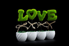 Piante di amore su fondo nero Immagini Stock Libere da Diritti