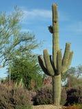 Piante di deserto Fotografie Stock
