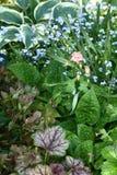Piante di giardino Fotografie Stock Libere da Diritti