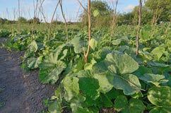 piante di giardino verdi nel campo all'aperto fotografie stock