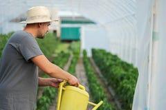 Piante di innaffiatura dell'agricoltore in una serra Immagini Stock Libere da Diritti