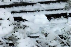 Piante di inverno nelle alpi europee Fotografie Stock