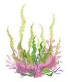 Piante di mare ed illustrazione stabilita dell'alga marina acquatica delle alghe Acquario giallo e marrone, rosso e verde Fotografia Stock Libera da Diritti