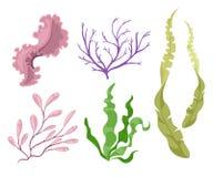 Piante di mare ed illustrazione stabilita dell'alga marina acquatica delle alghe Acquario giallo e marrone, rosso e verde Immagini Stock