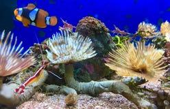 Piante di mare variopinte Fotografie Stock Libere da Diritti