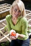 Piante di pomodori crescenti della donna nella piantatrice del cortile Fotografia Stock Libera da Diritti