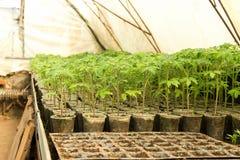 Scuola materna delle piante di giardino con irrigazione for Irrigazione serra