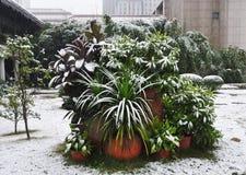 Piante di Snowy nell'inverno Immagine Stock Libera da Diritti