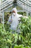 Piante di spruzzatura del giardiniere in serra Fotografia Stock Libera da Diritti