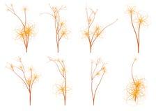 Piante di tema asiatiche degli alberi del fiore di ciliegia illustrazione di stock